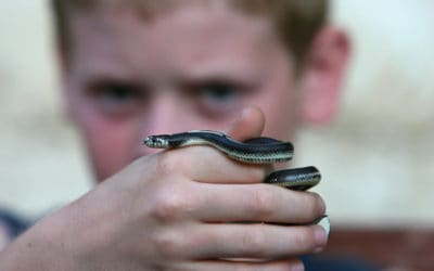 Boys, Snakes, and Insatiable Media Appetites